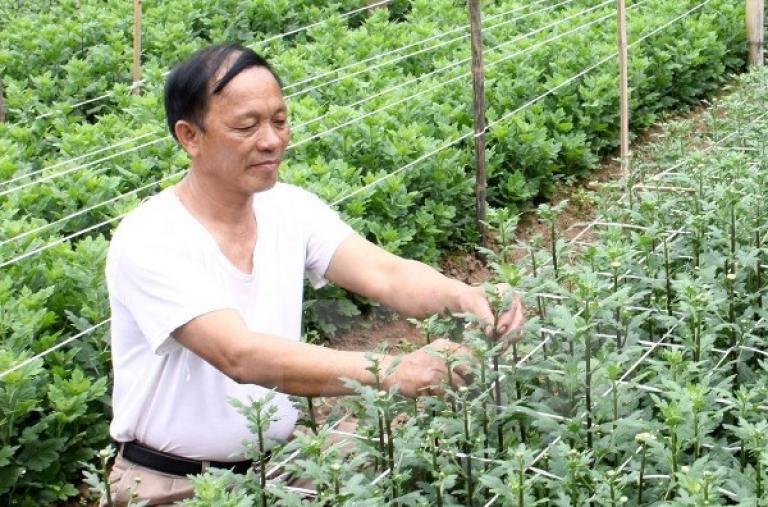Sáu ngân hàng cam kết tài trợ nông nghiệp công nghệ cao tại Thái Bình