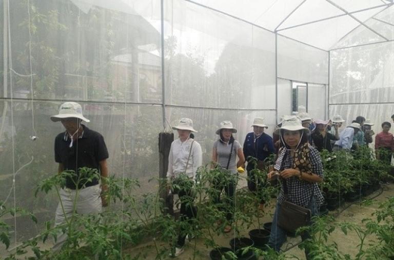 Ứng dụng công nghệ cao vào nông nghiệp đô thị