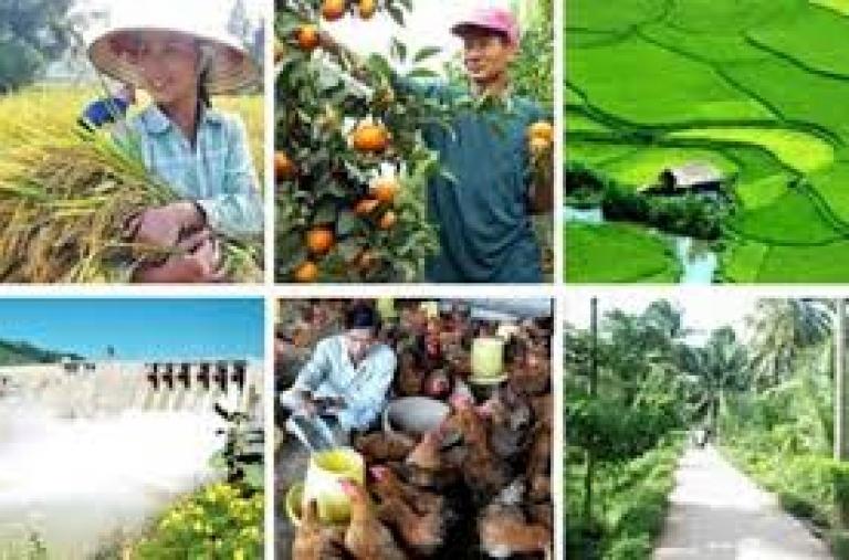 Liên kết trong sản xuất: Xu thế tất yếu của nông nghiệp hiện đại: Tìm