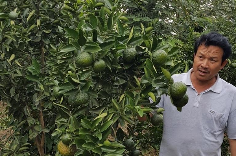 Đăk Lăk: Mô hình chuyển đổi cây trồng hiệu quả