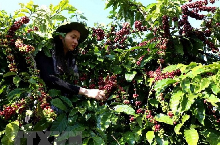 Cà phê Việt Nam sánh ngang các thương hiệu cà phê nổi tiếng của thế giới