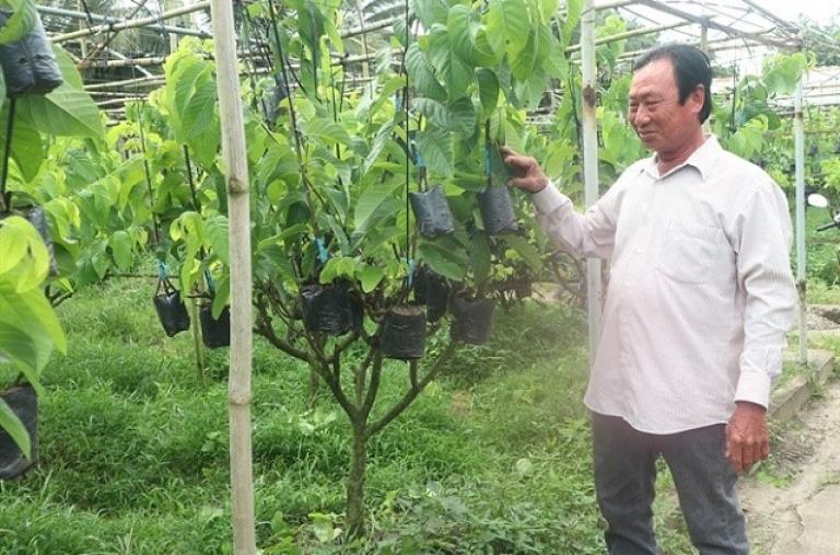 Lão nông trở thành tỷ phú từ sản xuất cây giống ở xã cù lao