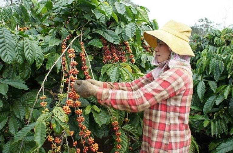 Hướng đi nào cho hợp tác cà phê giữa Việt Nam và Brazil?