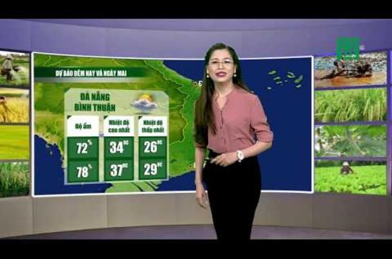 Thời tiết nông vụ 08/07/2019: Nông dân Trung bộ đề phòng bệnh trên cây thanh long