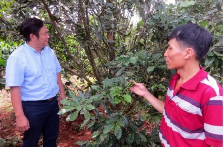 Nhìn lại 5 năm phát triển mạnh cây mắc ca ở Việt Nam