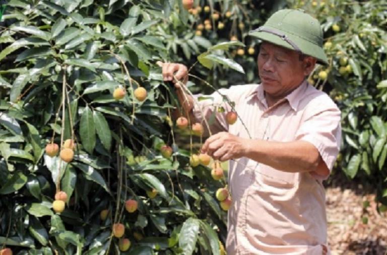 Việt Nam – Trung Quốc tháo gỡ khó khăn tiêu thụ nông sản do dịch Covid - 19
