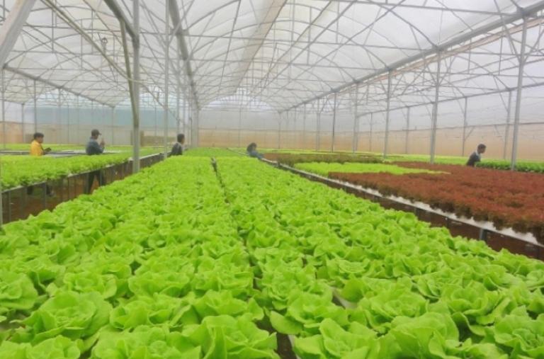 Lâm Đồng phát triển nông nghiệp công nghệ cao, nông nghiệp thông minh
