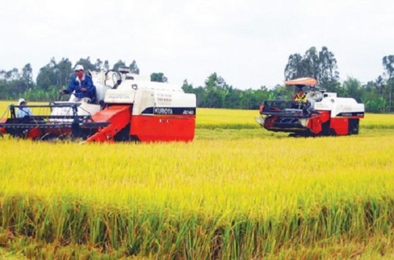 Cơ hội với hạt gạo Việt Nam