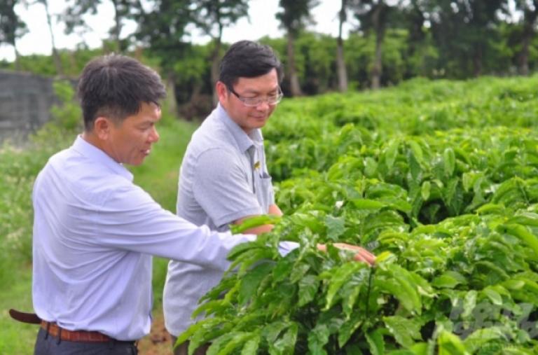 """""""Lò"""" sản xuất cây giống chất lượng cao cho Tây Nguyên"""