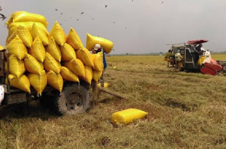 30 năm giá gạo Việt Nam lần đầu vượt Thái Lan: Cơ hội giành