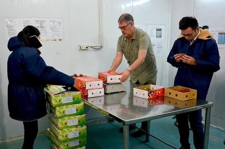 Tin vui: Bộ Nông nghiệp Mỹ đặc cách cử chuyên gia sang Việt Nam giám sát xuất khẩu trái cây