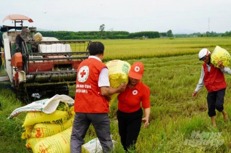 Nông dân Quảng Trị hối hả gặt lúa 'chạy' bão số 5
