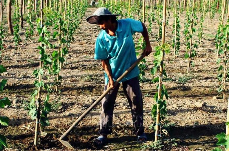 Chuyển đổi cây trồng thích ứng với khô hạn