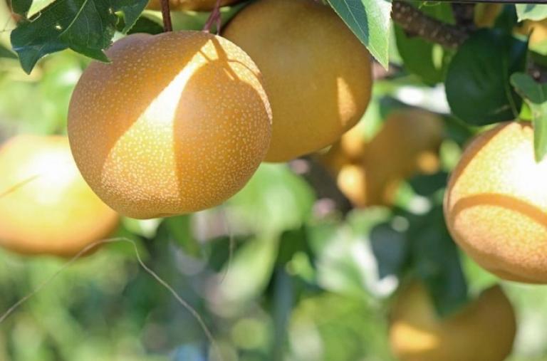 Rau quả nhập khẩu vào Thái Lan: Nhiều loại rau quả Trung Quốc trong nhóm nguy cơ rủi ro rất cao