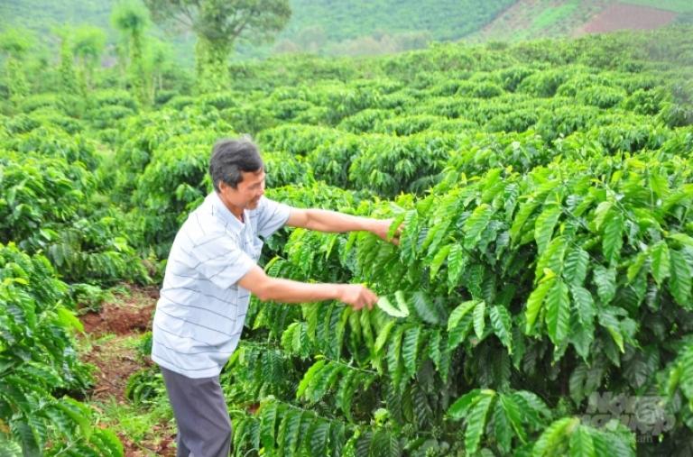 Tái cơ cấu ngành lúa gạo và cà phê: Mong VnSAT tiếp tục đồng hành cùng người trồng cà phê