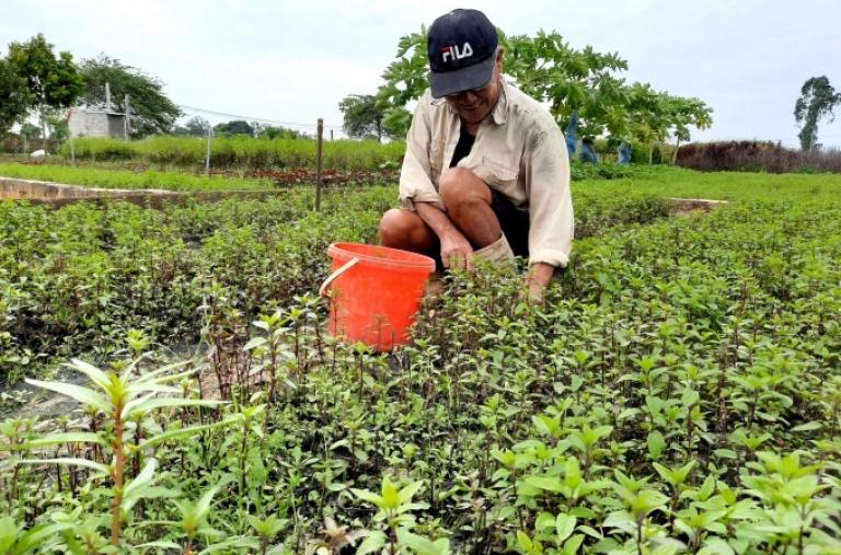 Vùng rau gia vị làm cỏ bằng tay