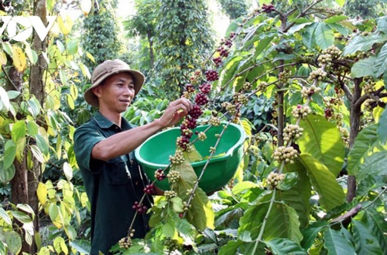 Cà phê Việt Nam có tiềm năng xuất khẩu vào Thụy Điển, Đan Mạch và Na Uy