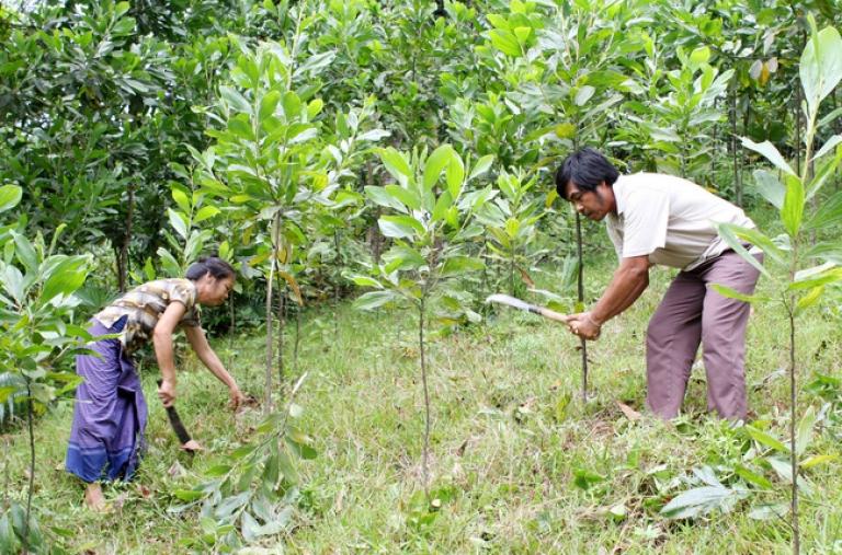 """Khởi động """"chiến dịch"""" trồng 1 tỷ cây xanh"""