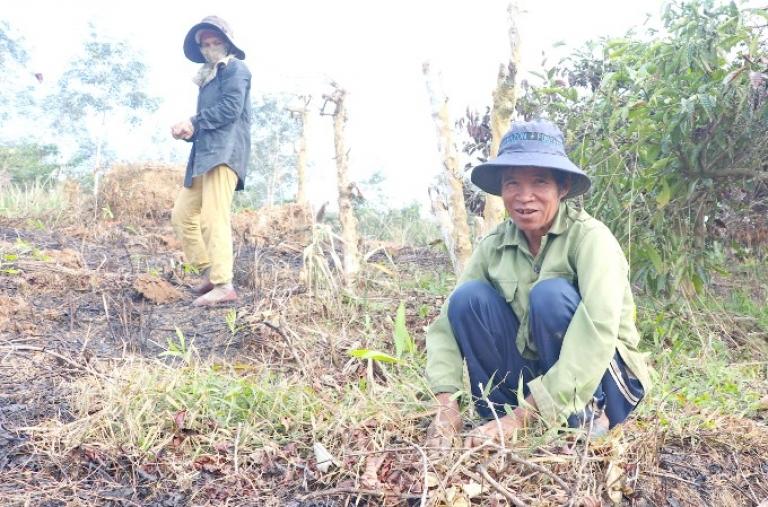 Kbang đẩy mạnh trồng rừng phủ xanh đất trống, đồi trọc