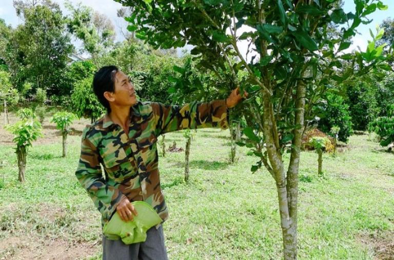 Bảo Lâm: Tập huấn đầu vườn kỹ thuật trồng và chăm sóc cây mắc ca
