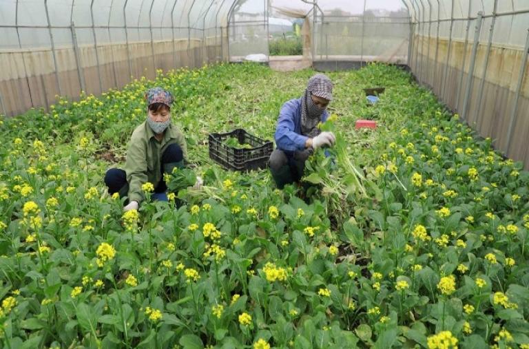 Hàng rau quả Việt Nam hướng tới mục tiêu xuất khẩu 10 tỷ USD