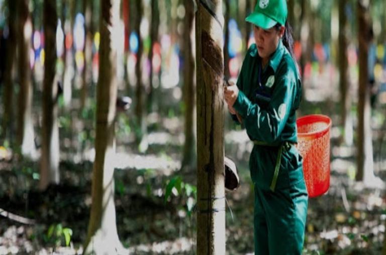 Trung Quốc dự trữ lượng khổng lồ, giá loại nông sản này lập tức tăng cao nhất trong 3 năm