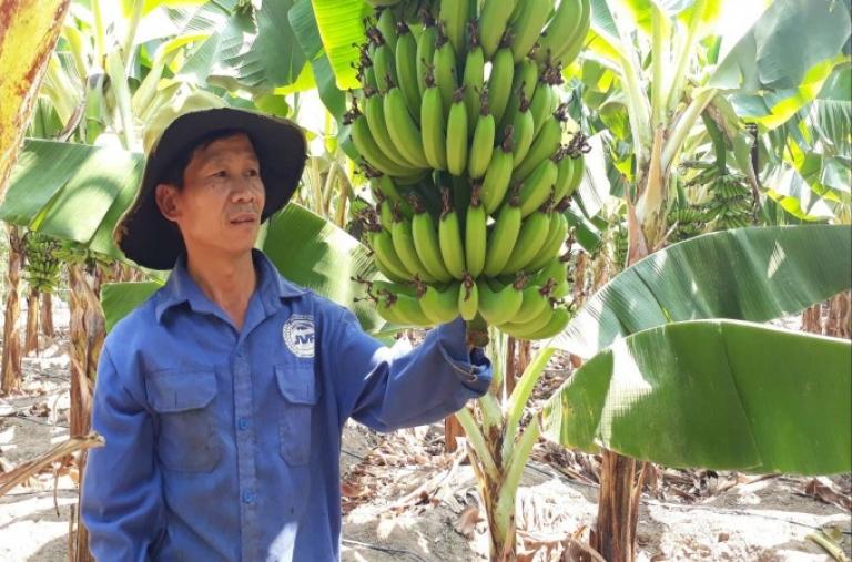 Thành phố Kon Tum: Đẩy mạnh phát triển cây ăn quả