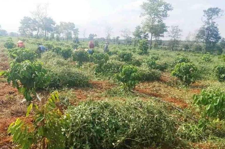 Chư Sê đẩy mạnh ứng dụng công nghệ cao trong sản xuất nông nghiệp