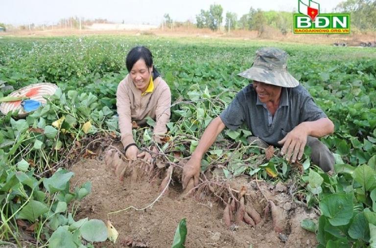 Chủ động chuyển đổi để tăng năng suất cây trồng