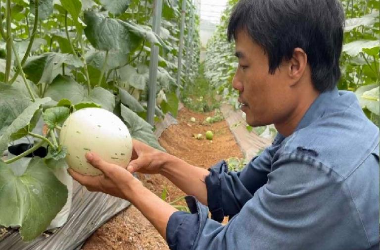 Sami Gia Lai làm nông nghiệp sạch
