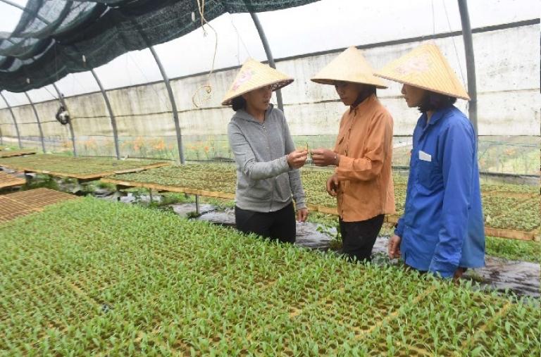 Phát huy vai trò hợp tác xã nông nghiệp