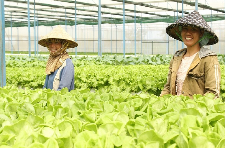 Tìm giải pháp phát triển sản xuất và tiêu thụ nông sản