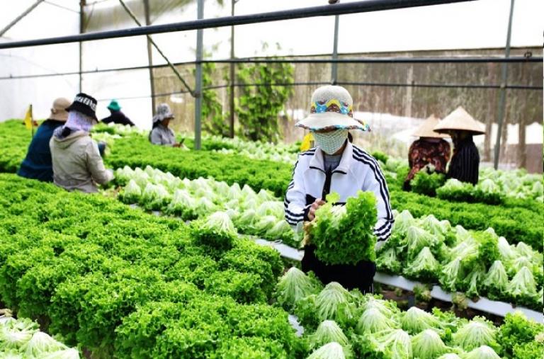 Sản xuất rải vụ - giải pháp để dễ tiêu thụ nông sản