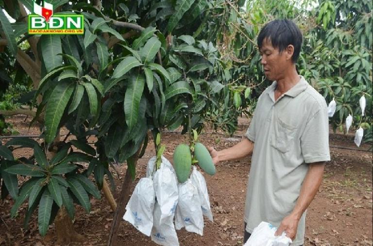 Đắk Nông và yêu cầu mở rộng vùng nguyên liệu hàng hóa