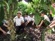 Thực hành trên vườn cà phê